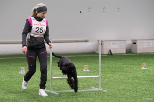 Rally-obedience trial. © Sari Eskelinen