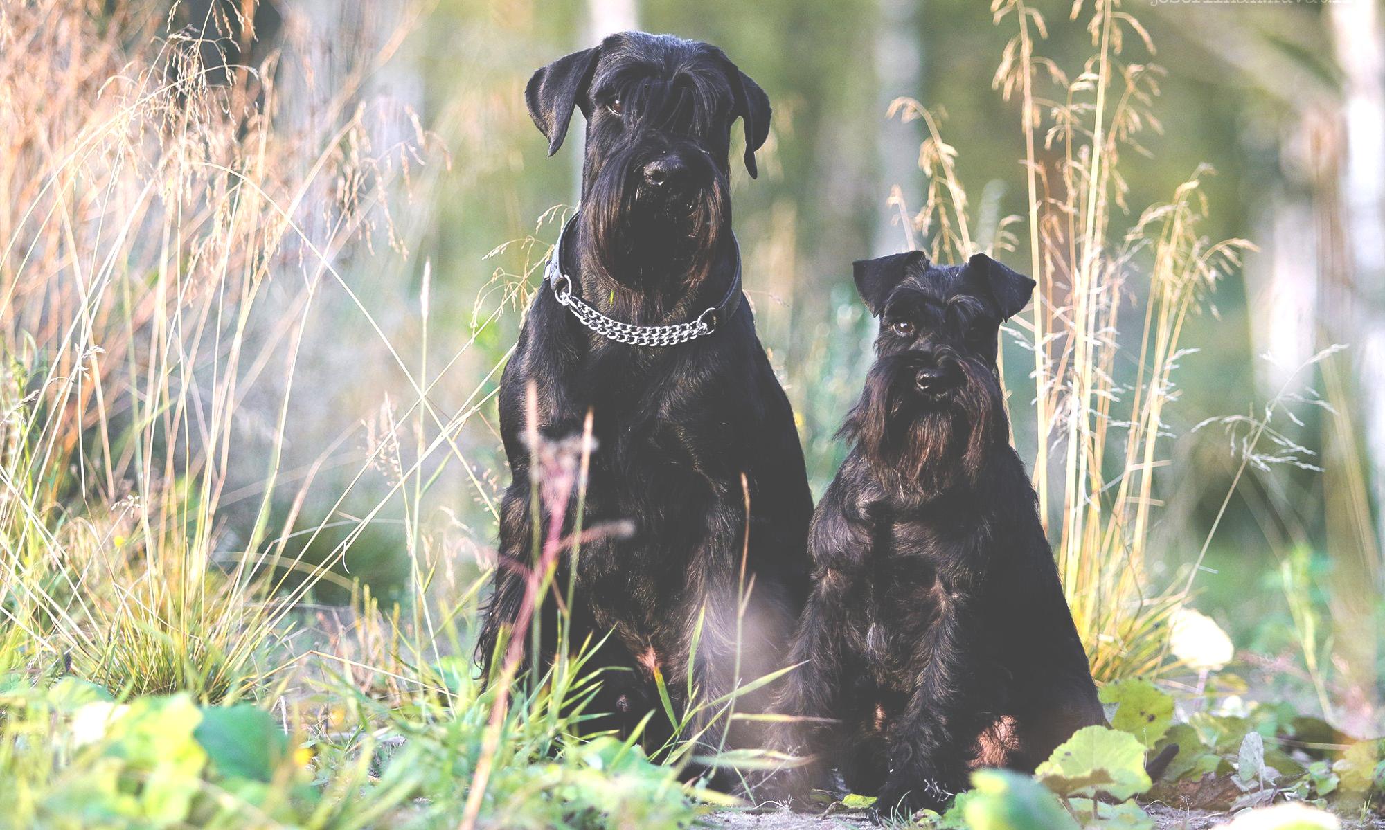 Resko & Kasko